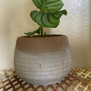 Terra-cotta pot with Gray Wash paint